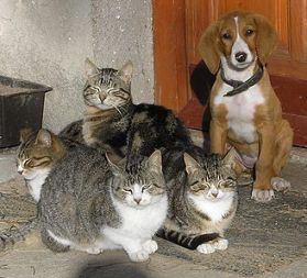 800px-Cats_and_dog