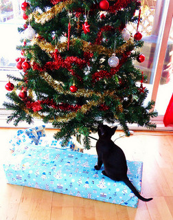 Christmas Tree with Kitten