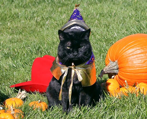 India_the_Cat_Miss_Beazley_and_Barney_Halloween_2007_(cropped)