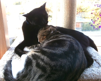 Cats Grooming on Cat Power Tower