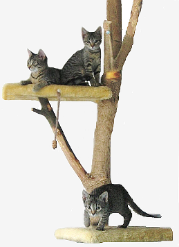 How to make a cat tree pdf woodworking for How to build a cat perch