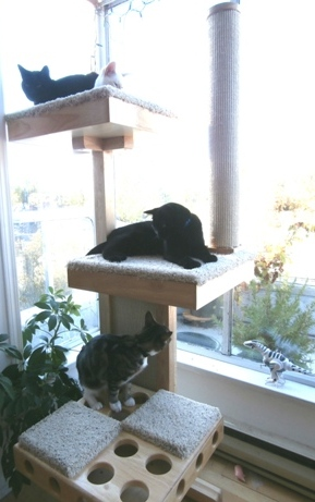 Cats Resting on Cat Power Tower