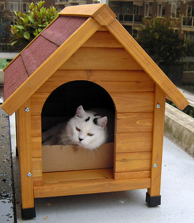 Free Doghouse Plans Free Cat Tree Plans And Free Cat
