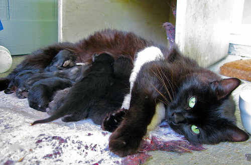mother cat with kittens