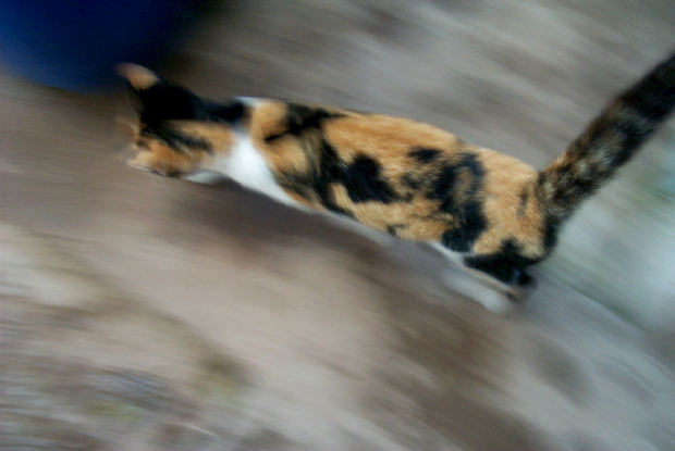 why do cats suddenly make mad dashes around the house