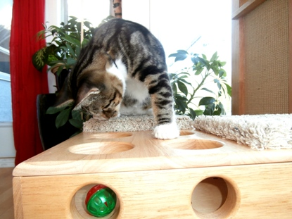 Cat Playing on Cat Power Tower
