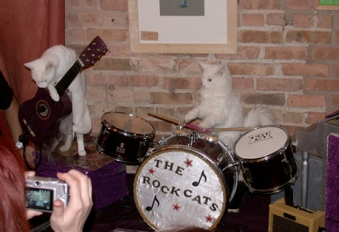 the rock cats band