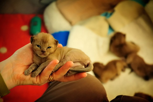 Kitten Development and Care: Birth to 2 Weeks | Metaphorical
