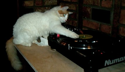 Cat with Record Player