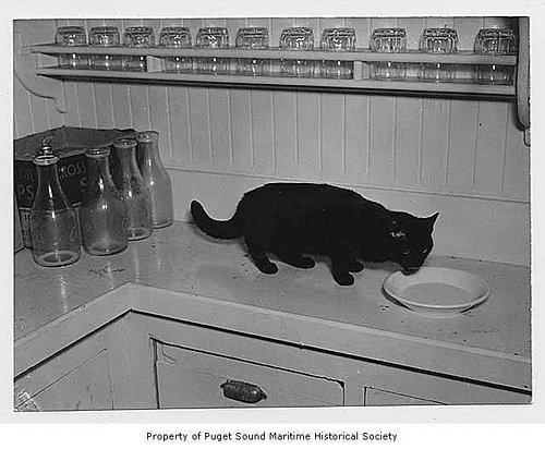 cat on counter