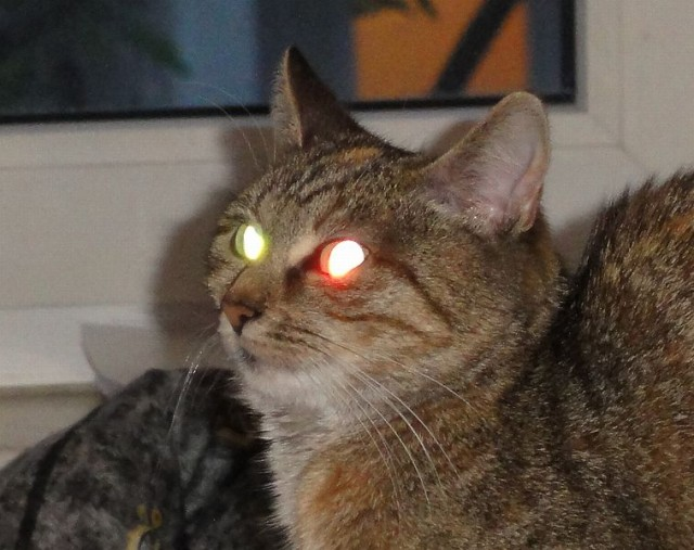 cat with eyes glowing in the dark