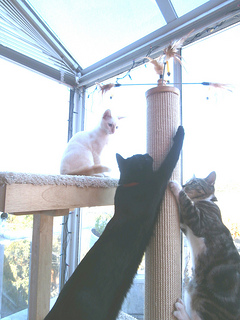 cats on cat tower